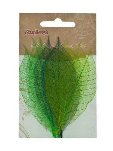 Скелетированные листочки из каучукового дерева, набор 8 шт, оттенки зеленого